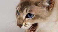 Вкусила кішка, опухла рука або палець – що робити?
