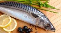 Скумбрія: користь і шкода для організму