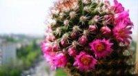 Правила пересадки кактусів і сукулентів