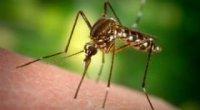 Як ефірна олія допомагає відлякувати комарів