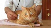 Хвороби кішок: симптоми і лікування, фото