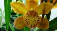 Хвороби орхідей