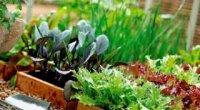 Як виростити зелень на підвіконні: корисні поради господиням