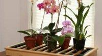 Як виростити з насіння орхідею