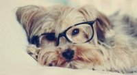 Скільки років собаці за людськими мірками