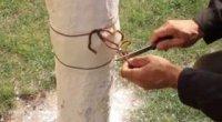 Як змайструвати ловчий пояс для захисту дерев?